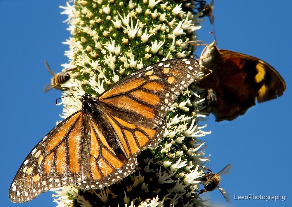 Blackboy, Butterflies & Bees - Mount Barker Summit by LeeoPhotography