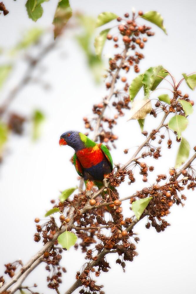 Pretty Polly by Deidre Cripwell
