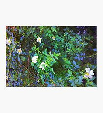 Blooming Shrubs Photographic Print