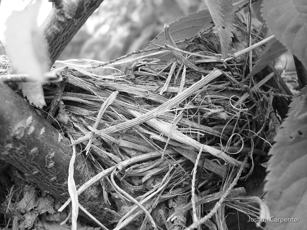 Robins Nest by Joshua Carpenter