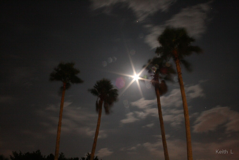 4Palms by Keith  Langosch