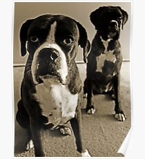 What do you mean she's right behind me .... -Boxer Dogs Series- Poster