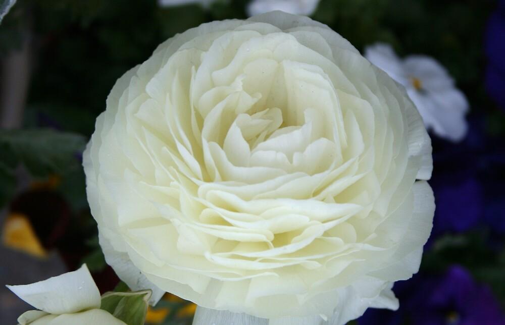 Flowers3 by heatherranae