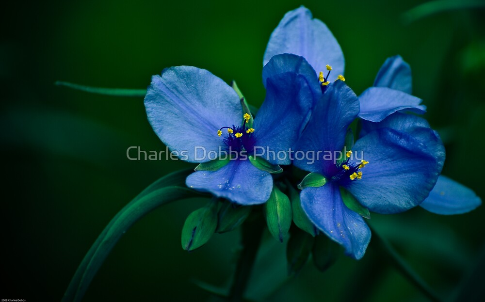 Blue Aura by Charles Dobbs Photography