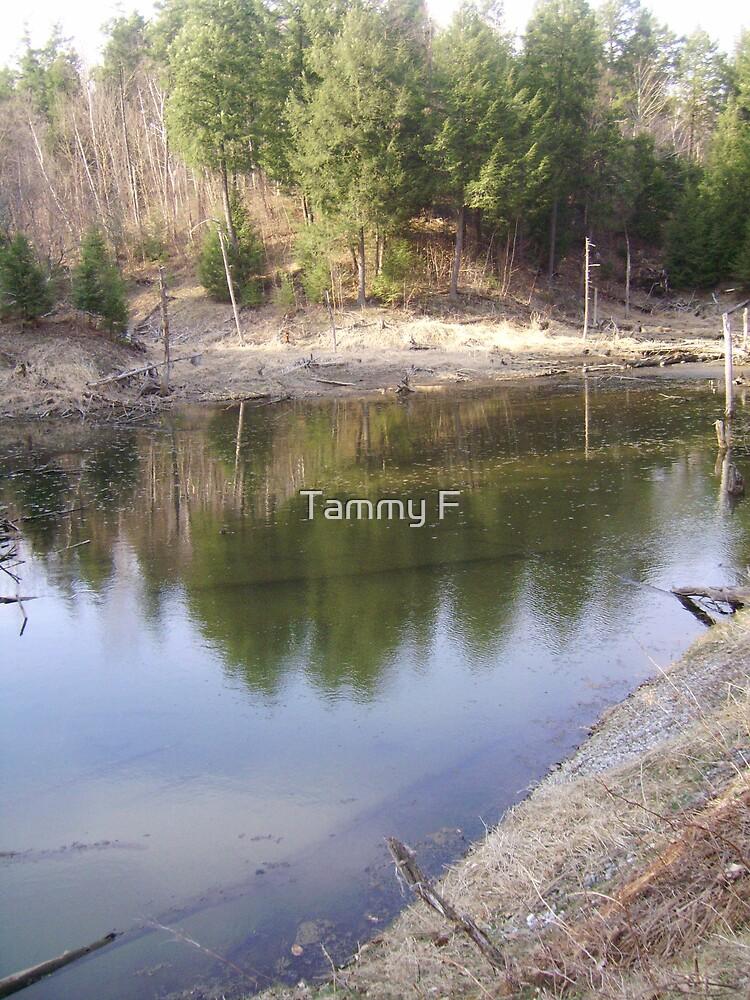 The Beaver Pond by Tammy F