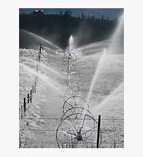 Frosty Sprinklers  Photographic Print