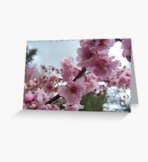 Flowering Greeting Card