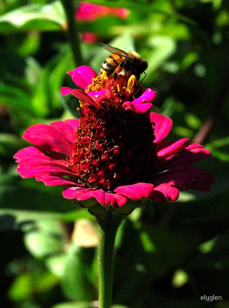Bee on a Flower by elyglen