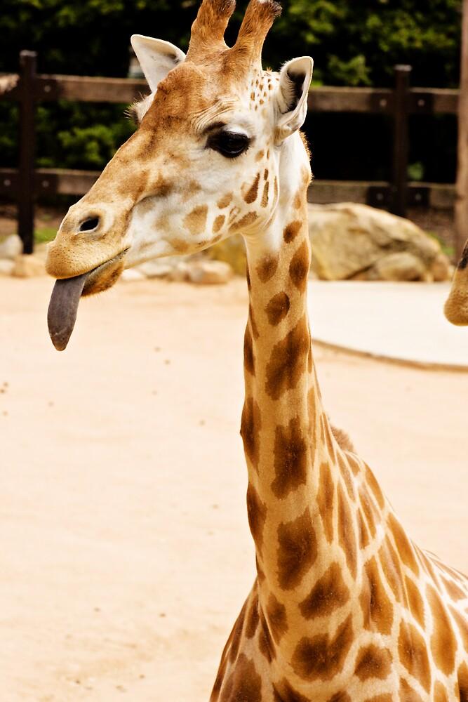 cheeky giraffe by CapturedByBec