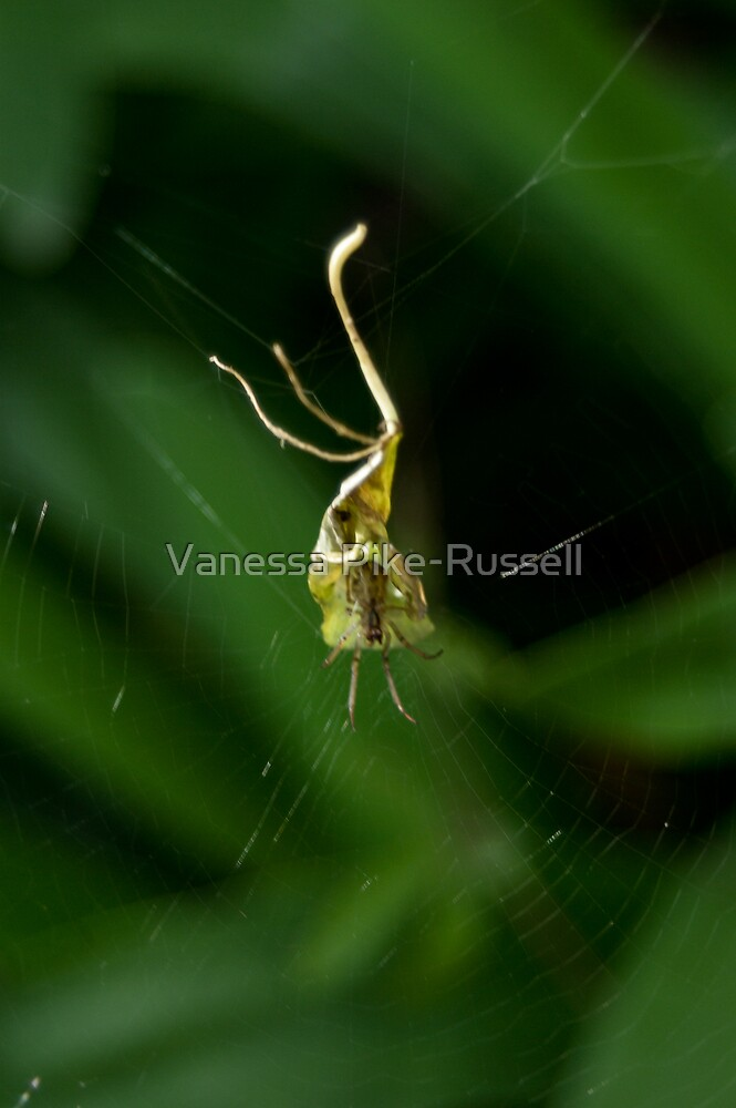 Spider in leaf by Vanessa Pike-Russell