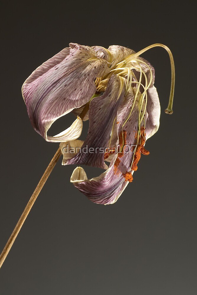Wilted by danderson107