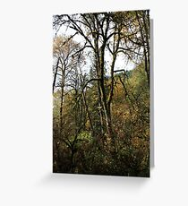 Canyon Creek 5 Greeting Card