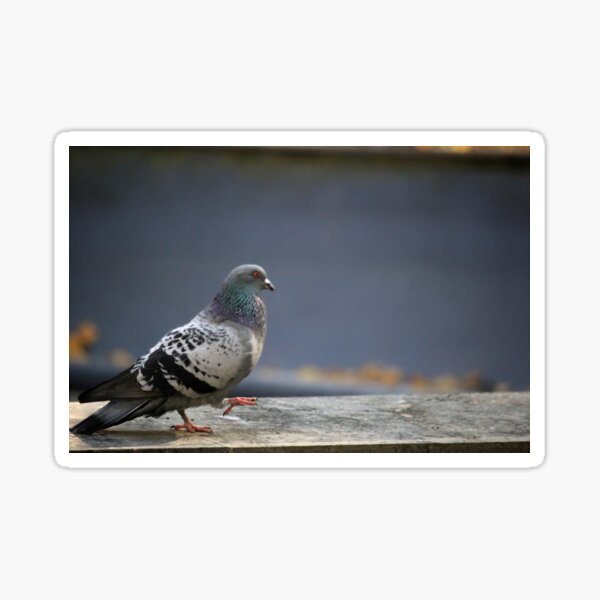 The Pigeon Marches to his own Tune Sticker