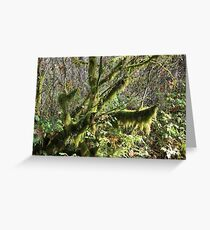 Canyon Creek 20 Greeting Card