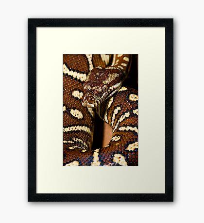 Centralian Carpet Python Framed Print