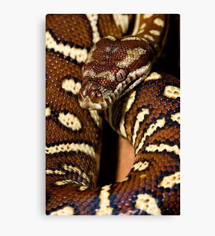 Centralian Carpet Python Canvas Print