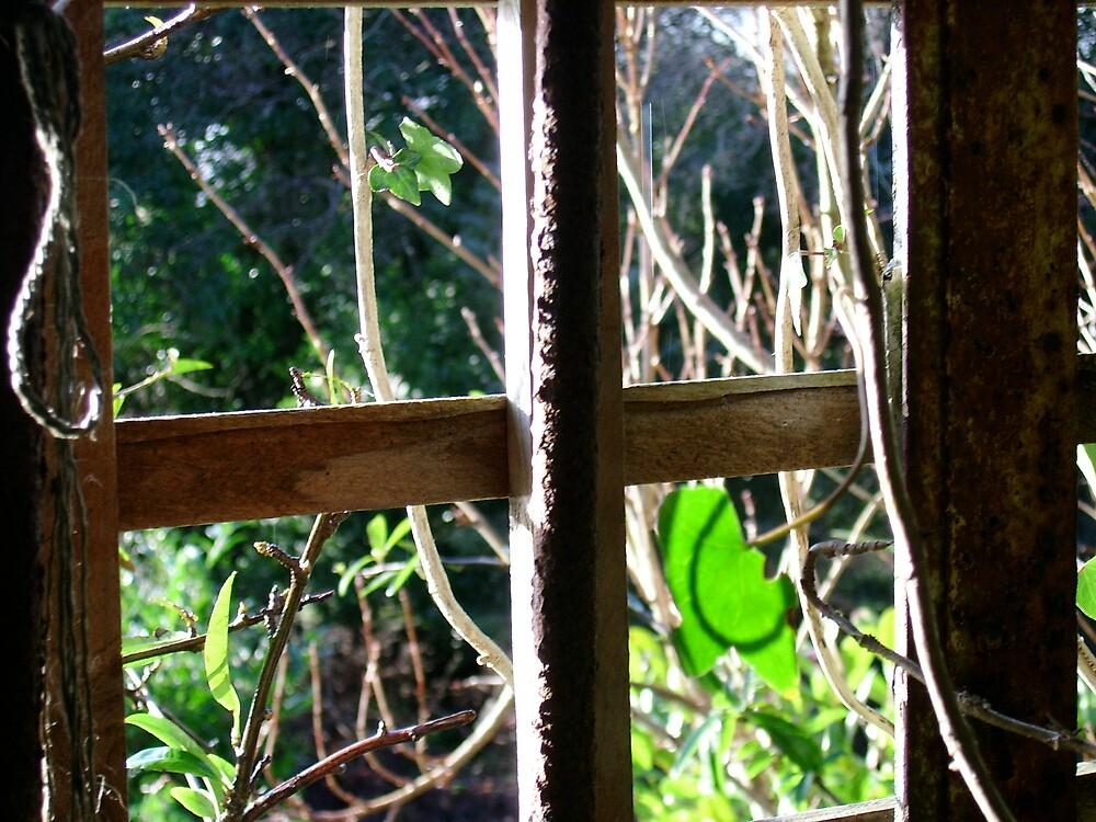 SECRET WINDOW by EdelPankhurst