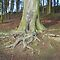 Tree Roots .. photos only
