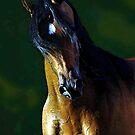 Arabian Horse Watercolor Portrait by Oldetimemercan