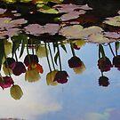 Tulip Reflections  by Diana Sénèque