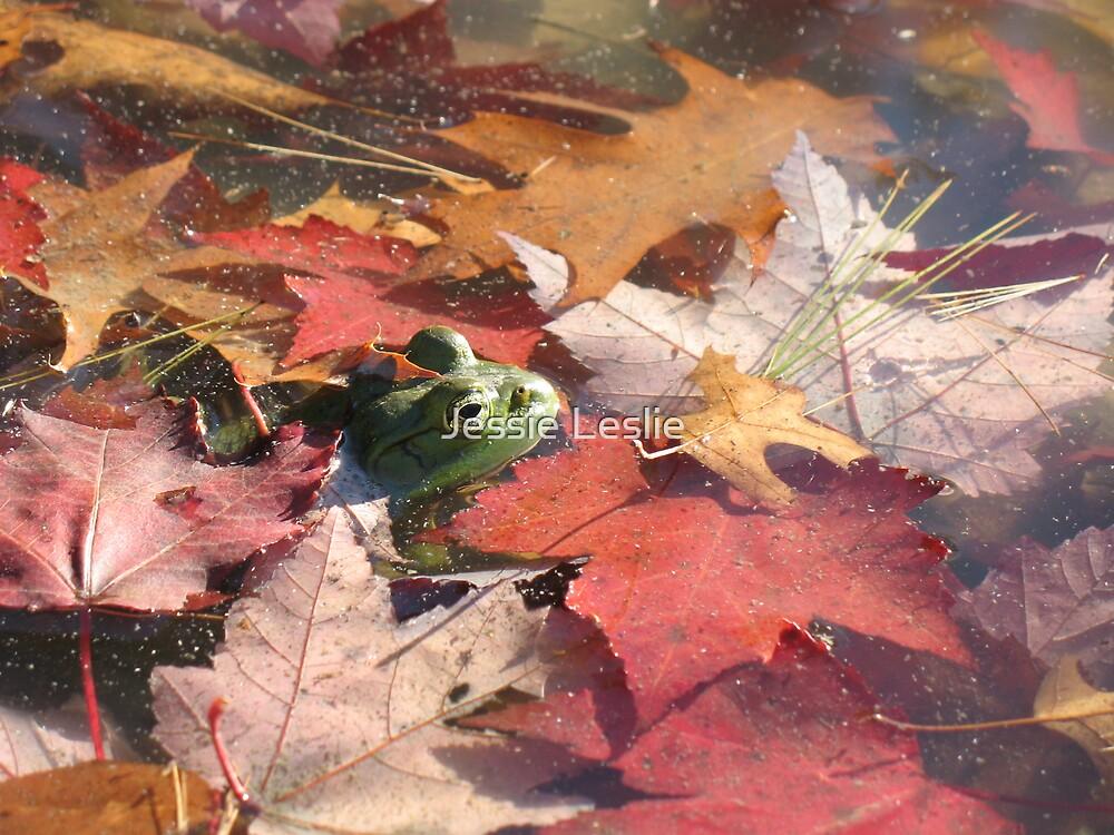 Frog in Leaves by Jessie Leslie
