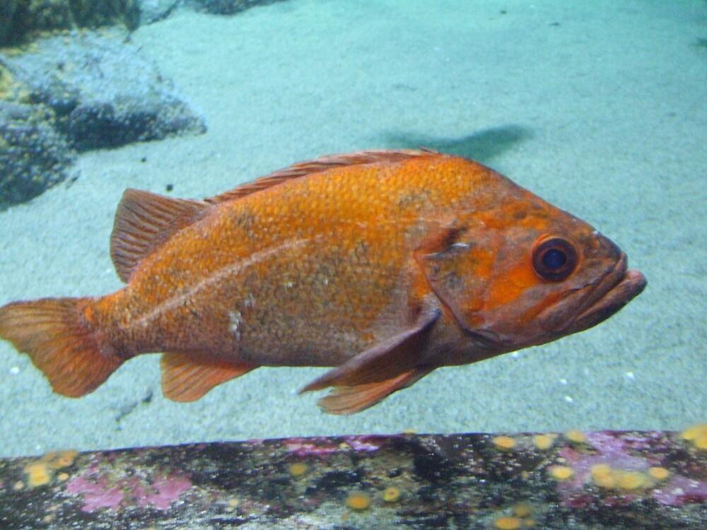Fish by iamclark