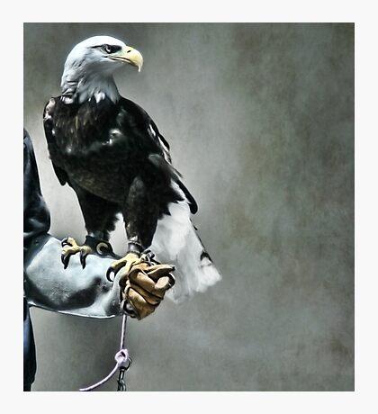 Proud Eagle Photographic Print