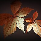 Shades Of Autumn by Christine Lake