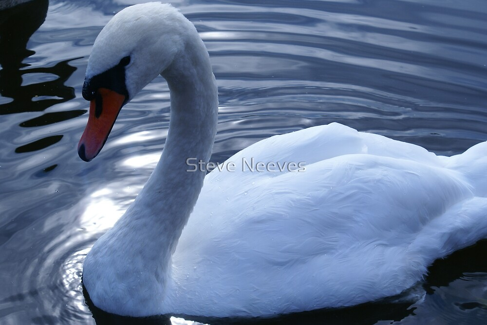 The perfect pose  by Steve Neeves