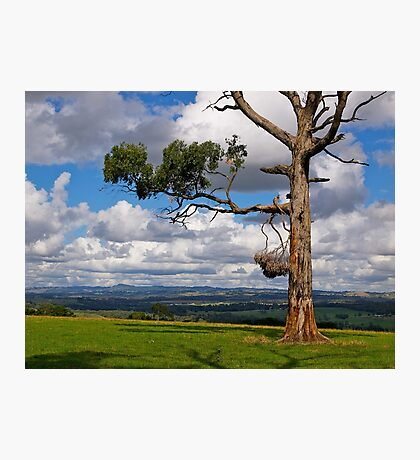 Great farming country, Drouin, Gippsland, Victoria. Photographic Print
