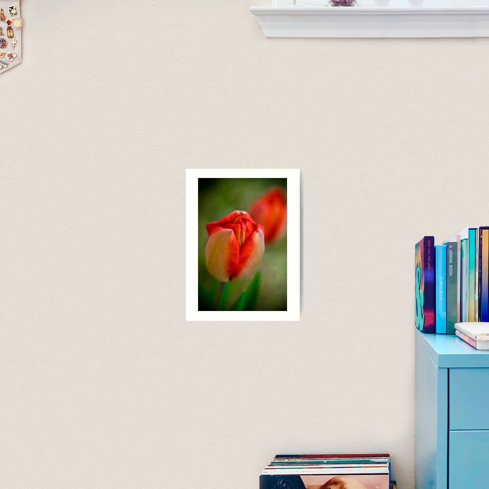 Tulips Opening Slowly Art Print