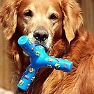 Million Dollar Dog by © Loree McComb