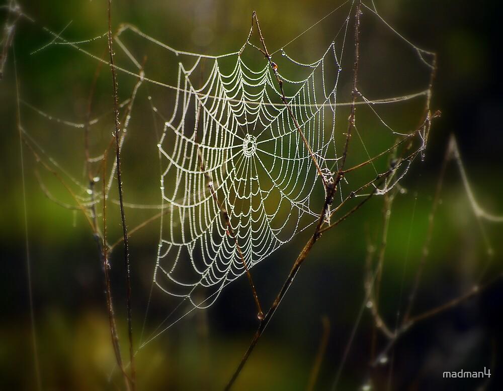 Foggy Morning Web by madman4