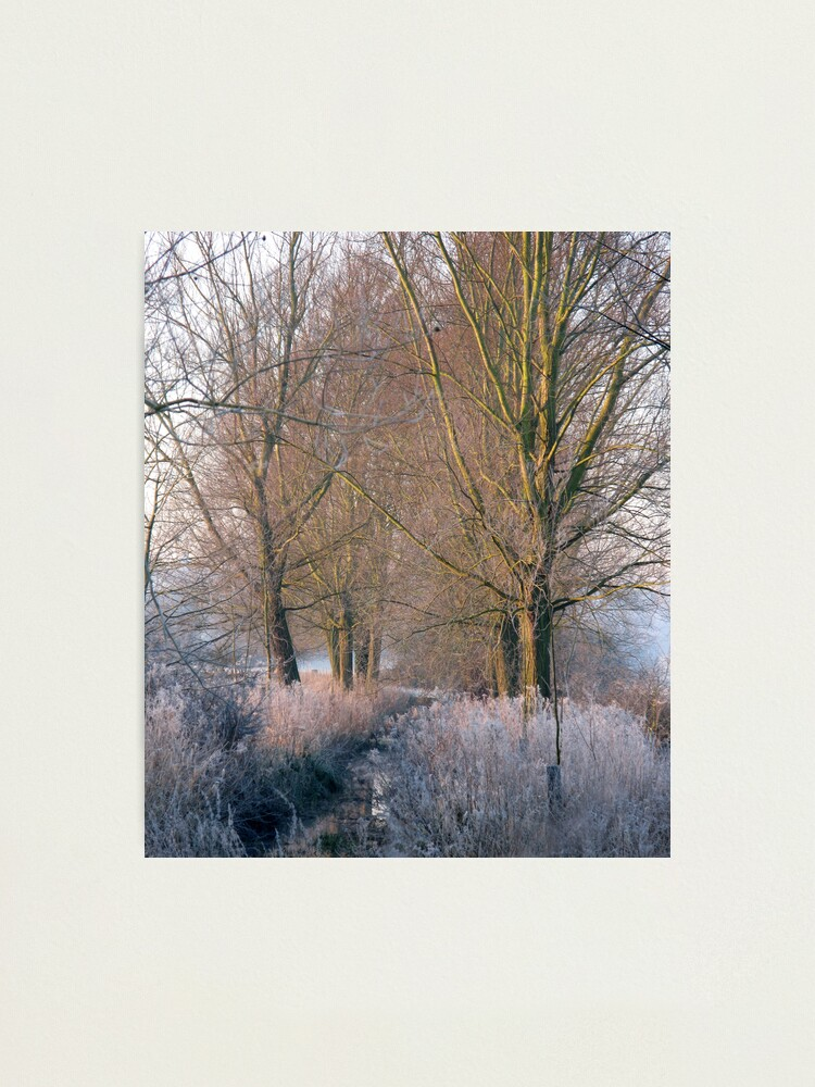 Alternate view of Frost Stream Photographic Print