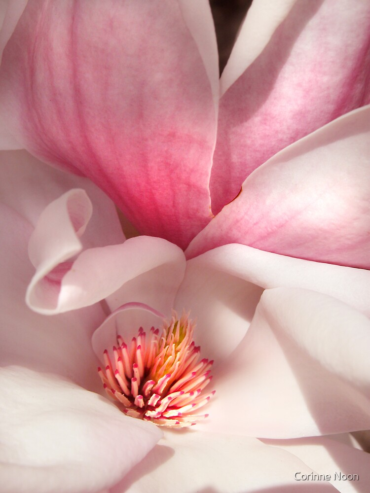 Super Magnolia by Corinne Noon