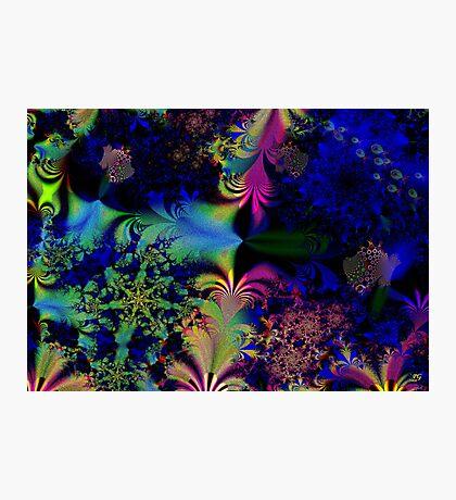 Undersea Life Photographic Print