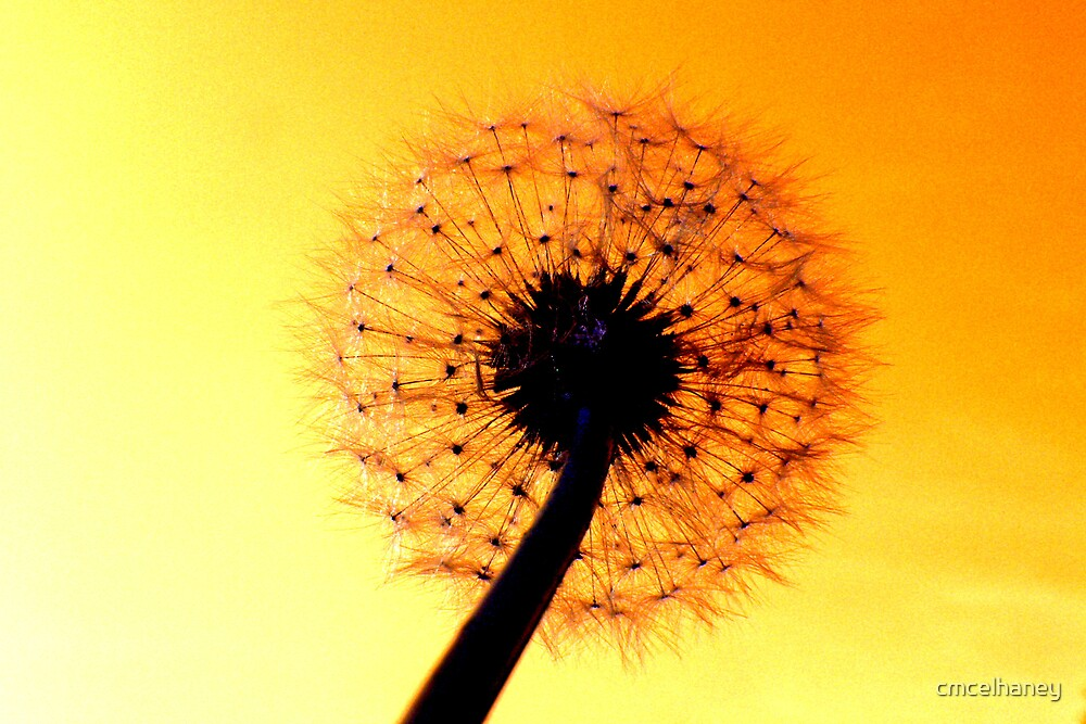 Dandelion Delight by cmcelhaney