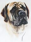 Mastiff by BarbBarcikKeith