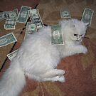 Money cat. Silver Persian cat photography by Vitaliy Gonikman