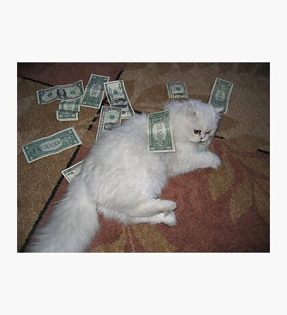 Money cat. Silver Persian cat photography Photographic Print