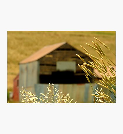 Country Grasses Photographic Print