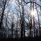 Winter Trees by Elizabeth Casswell