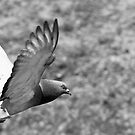 In Flight! B&W by InvaderCuban
