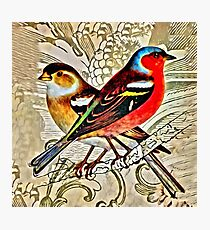 BRIGHT BIRDIES COLLAGE Photographic Print