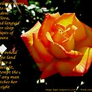 Collaboration..A Friendship Rose by Roger Sampson