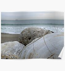 Shells on the Cold March Beach  Poster