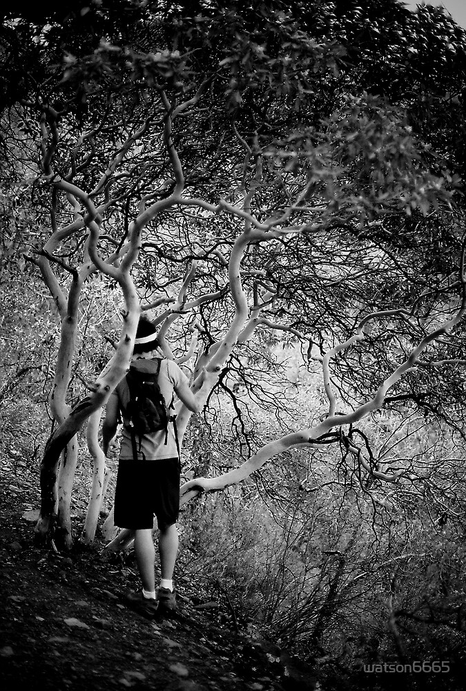 Below the Naked Tree by watson6665