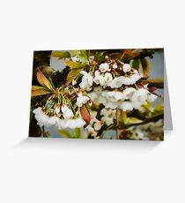 Flower Art - Apple Blossoms Greeting Card
