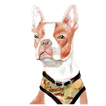 Portrait of a Boston Terrier by pjscribble