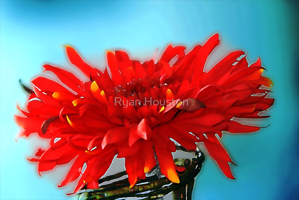 Red Flower in a Jar by Ryan Houston